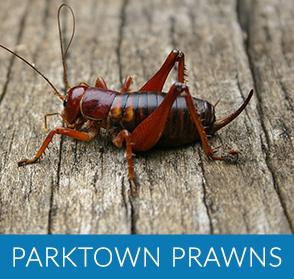 Parktown Prawns
