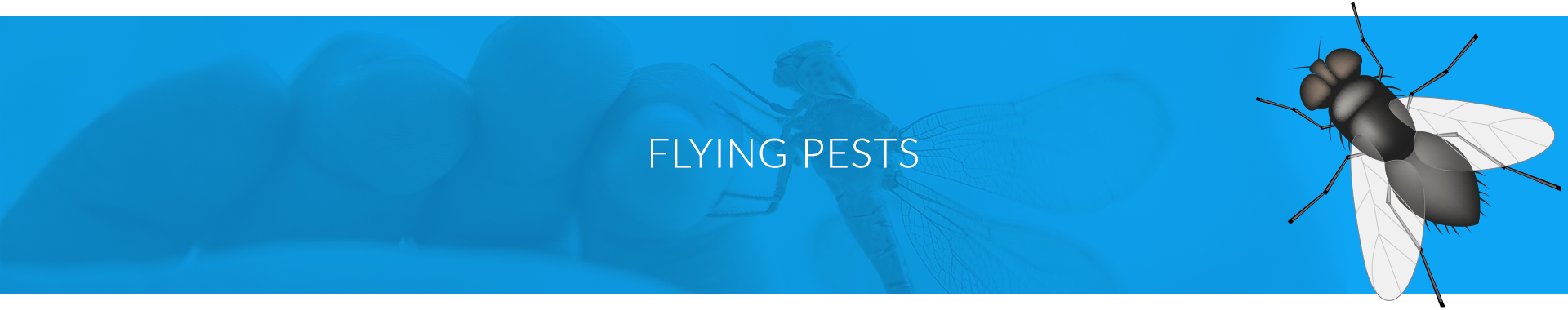PestChem Flying Pests Banner